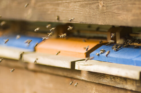 Honeybee hives (Apis mellifera) - HHF02060