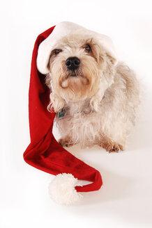Little dog with Santa Claus hat - 00386LR-U