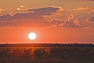 Africa, Botswana, Silhouette of Springbok Herd (Antidorcas marsupialis) - FOF00707