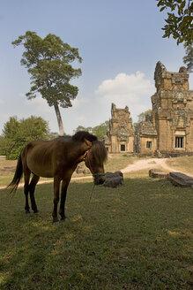 Cambodia, Angkor, Siem Reap, Prasat Suor Prat, Temple and horse - GA00074