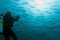 Galapagos Islands, Ecuador, Scuba diver photographing Shoal of Fish - GNF01014