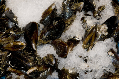 Spain, Madrid, Mussels on crushed ice, elevated view - AWDF00054