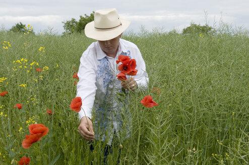 Man picking poppy (Papaver sp.) - AWDF00027