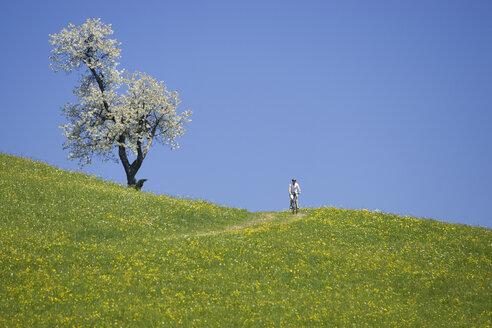 Germany, Bavaria, Oberland, Person mountain biking across flowering meadow - DSF00094