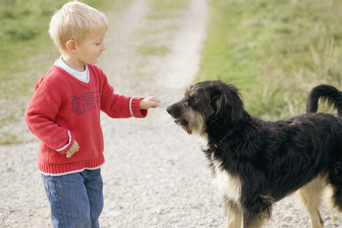 Little boy (3-4) playing with dog - SMOF00171