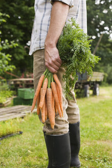 Man holding bunch of carrots, low section, close-up - BMF00453