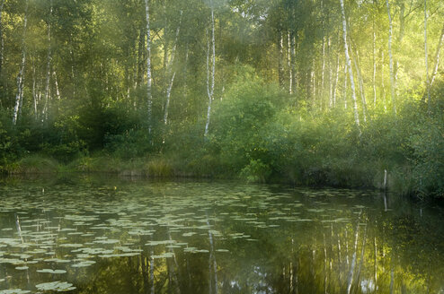 Germany, Water lilies on lake in forest - SMF00396