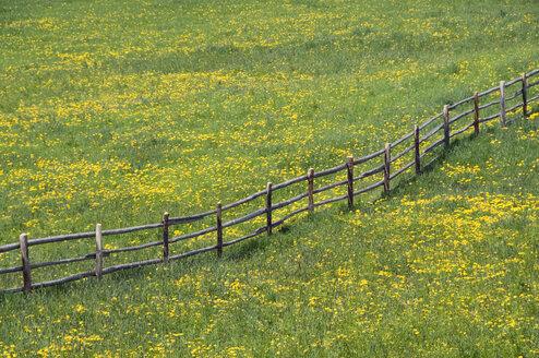 Italy, South Tyrol, Flowering meadow - GNF01068
