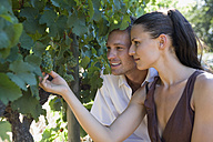 Young couple looking at grape vine, close-up - ABF00491