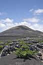 Spain, Lanzarote, La Geria, Vineyard - UM00254
