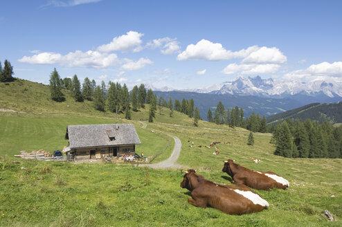Austria, Salzburger Land, Cattle resting on mountain pasture - HHF02809