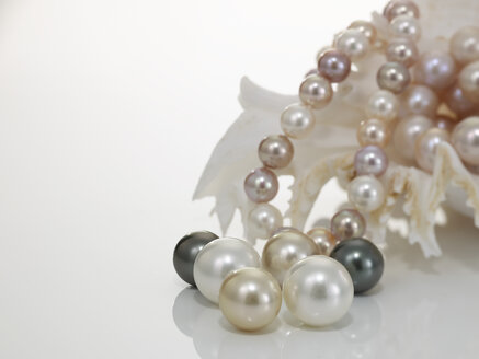 Pearl necklet and pearls  with nautilus - AKF00014