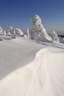 Germany, Saxony-Anhalt, Snowcapped trees - RUEF00084