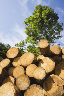Stack of logs - WWF00441