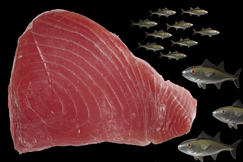 Raw tuna steak and plastic fish, close-up - THF01020