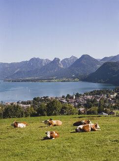 Austria, Lake Wolfgangsee, St. Gilgen, cattle herd in foreground - WWF00666