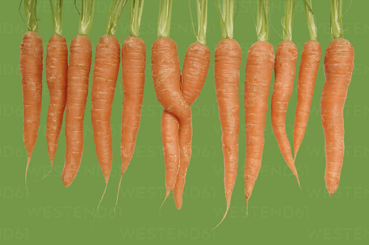 Carrots in a row - 00497LR-U - Liane Riss/Westend61