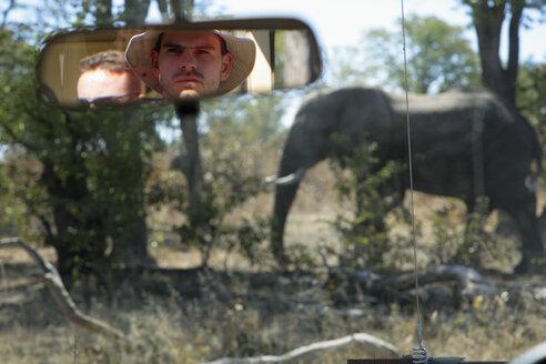 Africa, Botswana, Okavango Delta, Men in car viewing Elephant (Loxodonta africana) - PK00326