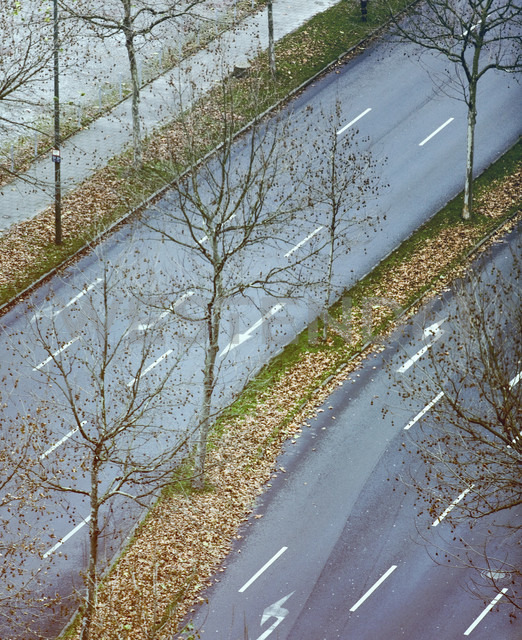 Germany, Düsseldorf, Street, grass strip with leaves, elevated view - MF00379