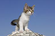 Germany, Bavaria, Kitten standing on rock - RUEF00176