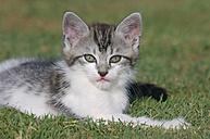 Germany, Bavaria, Kitten lying in meadow - RUEF00173