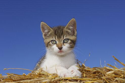Germany, Bavaria, Kitten lying in straw - RUEF00170