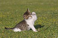 Germany, Bavaria, Kitten playing in meadow - RUEF00164