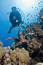 Egypt, Red Sea, Scuba diver and Common lionfish (Pterois volitans) - GNF01150