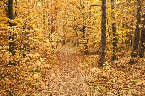 Germany, Rhineland-Palatinate, Wood, autumn colours - GWF00993