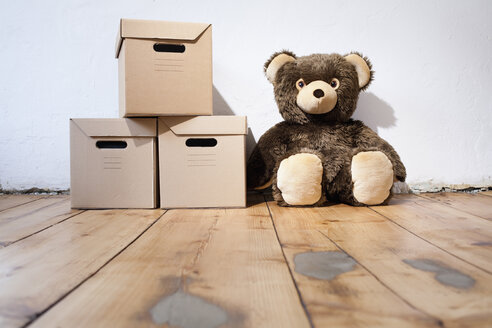 Teddy next to cardboard boxes - JRF00123