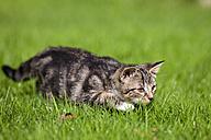 Germany, Bavaria, Kitten in grass - FOF01962