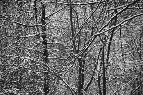 Germany, Hamburg, Winter forest, full frame - TLF00395