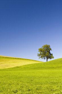 Germany, Bavaria, Allgäu, Tree in landscape - SMF00550