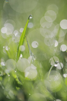 Germany, Bavaria, Dewdrops on glass blades, close-up - RUEF00331