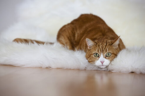 Ginger and white cat lying on fur, portrait - FOF02041
