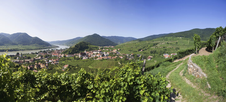 Wachau, Spitz, View of village and vineyard by Danube river - WWF01189