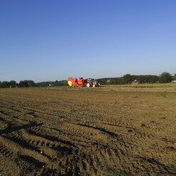 Germany, Hessen, Potatoes in field with combine harvester in background - AKF00156