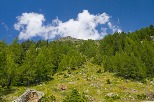 Italy, South Tyrol,  Ultental, Mountain with trees in forest - SMF00593