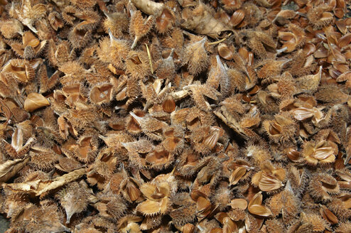 Germany, Nennslingen, Background of beech nut shells - SRSF00098