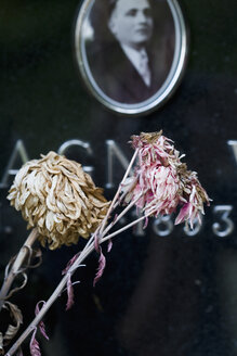 Italy, Cavoleto, Withered flowers on gravestone - HOEF00256