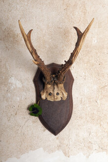 Deer antler on wall - AWDF00530