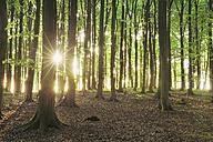Germany, Ruegen Island, Sunlight through beech trees in forest - RUEF00382