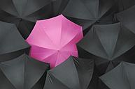 Open black umbrellas with one pink umbrella, close up - ASF04102