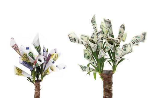 Plant with flowers made from euro and dollar notes against white background - 13312CS-U