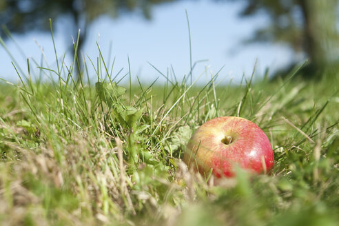 Germany, apple in grass, close up - LFF000217
