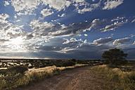 Africa, Botswana, Mabuasehube, Offroad track in the Kalahari - FOF002146