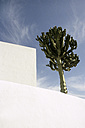 Spain, Lanzarote, View of cactus tree on architectural white wall - JMF000078