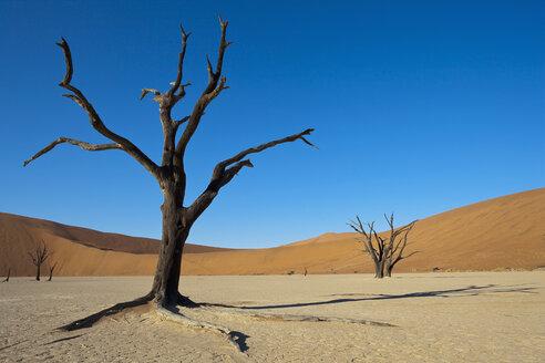 Africa, Namibia, Namib Naukluft National Park, Dead tree in namib desert - FOF002360