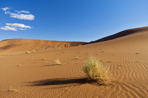 Africa, Namibia, Namib Desert, View of sand dunes in namib-naukluft national park - FOF002379