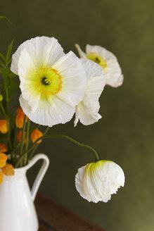Hamburg, Close up of white poppy in vase - TLF000540